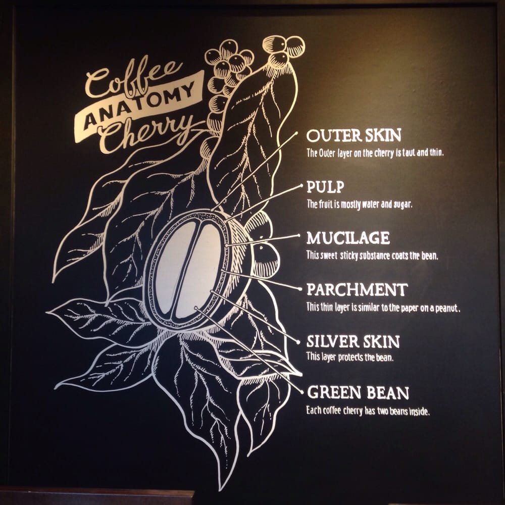 Coffee Processing and What it Means to Your Morning Cup - Addison ...